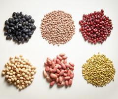blithe-beans_medium